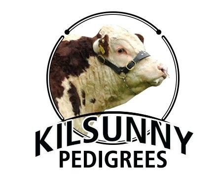 Kilsunny Pedigree Herds